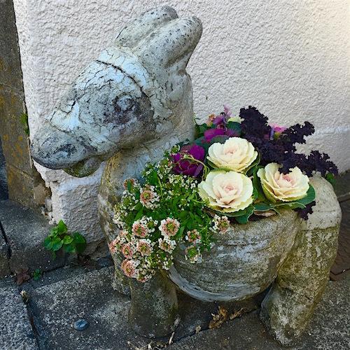 roba-flower.jpg
